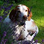 shelta Online-Tierheim Fotoaktion: Mischlingshund Benni | © Susanne Reichmann