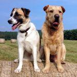 shelta Online-Tierheim Fotoaktion: Mischlingshunde Maddox und Tayo | © Sylvia Brehm