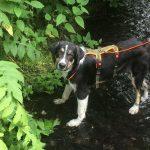shelta Online-Tierheim Fotoaktion: Mischlingshund Jake | © Tanja Schwan