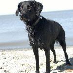 shelta Online-Tierheim Fotoaktion: Mischlingshund Winston | © Thomas Hofmann