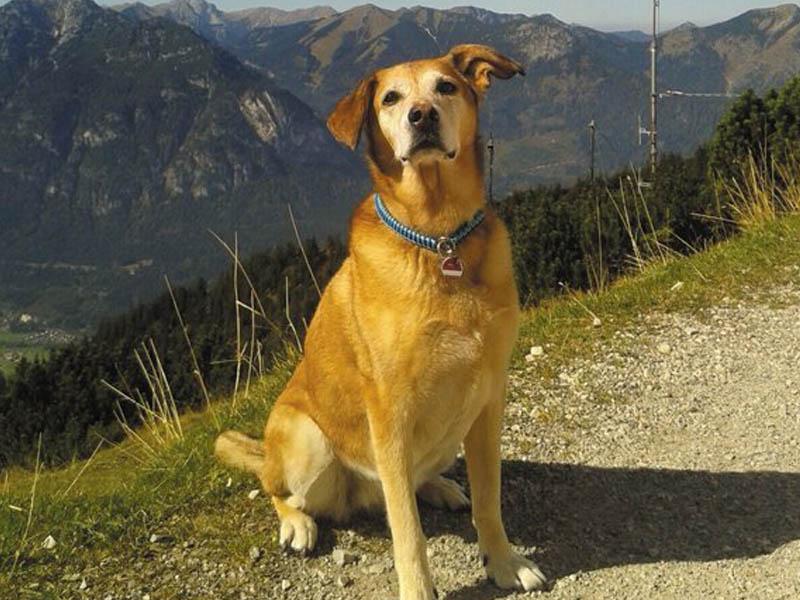 Mischlingshund in den Bergen. © Christine-Eisenach
