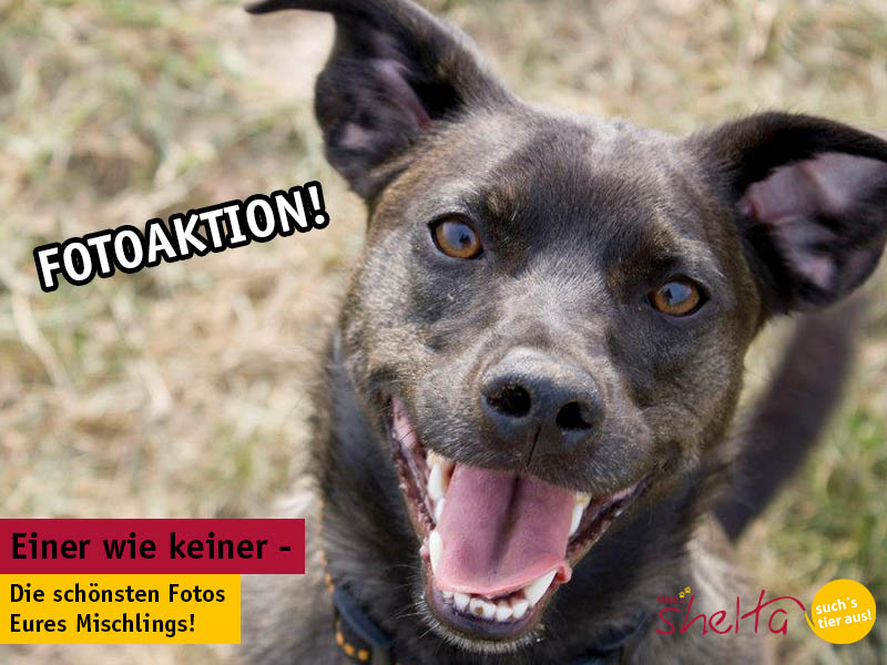 Mischlingshund Fotoaktion von TASSO shelta.