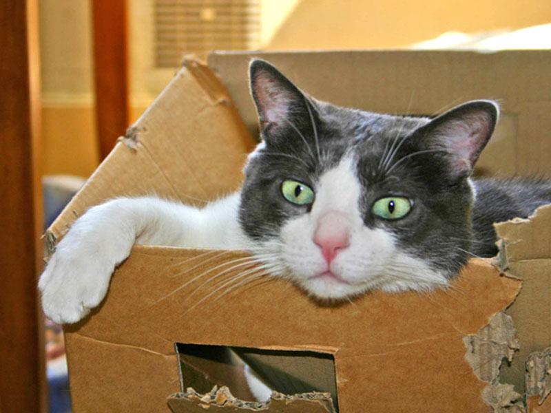 Umzug mit Katze - Katze im Karton - shelta
