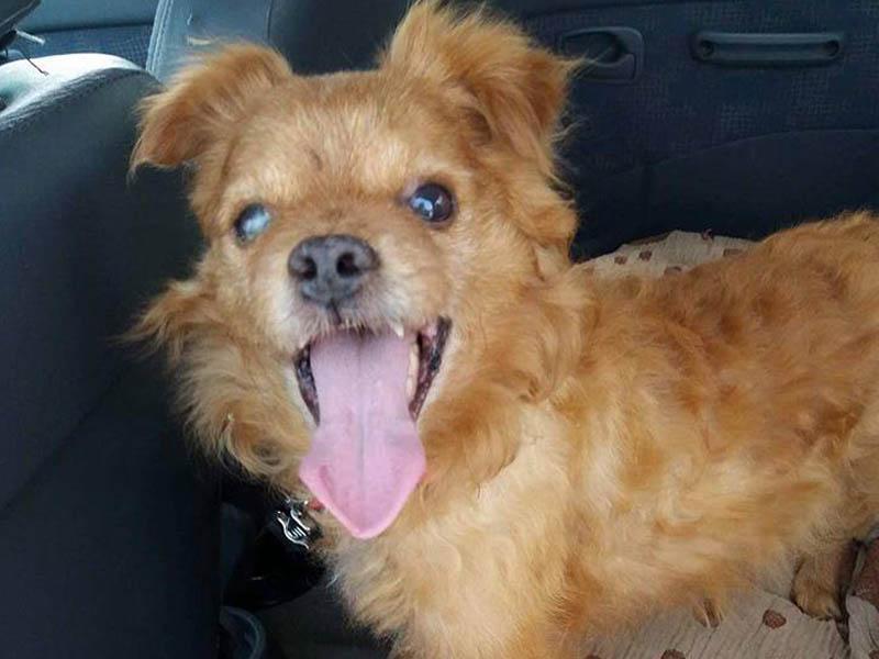 shelta Notfalltier des Monats: Mischlingshund Benny