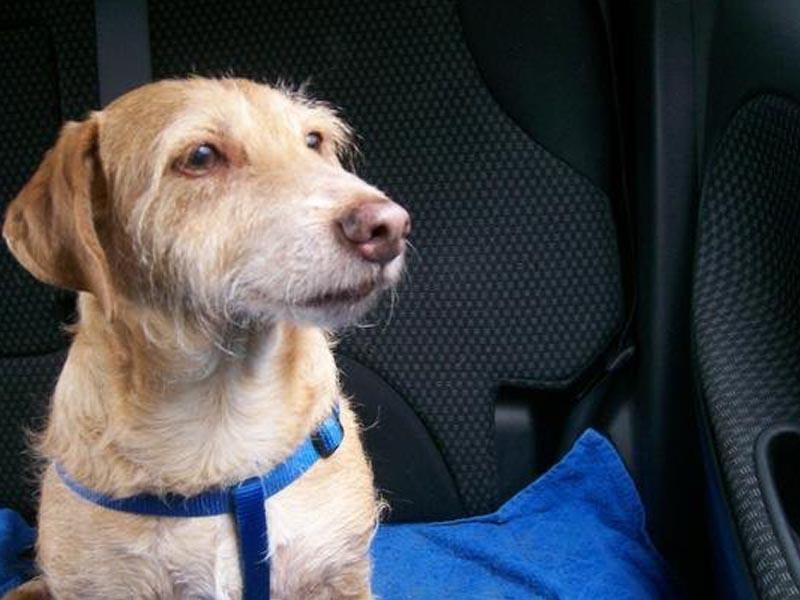 Hund im Auto_(c) Katrin Seemann