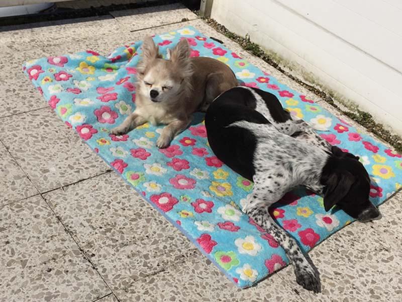 Schnauzensicht_Dotty und Bella in der Sonne