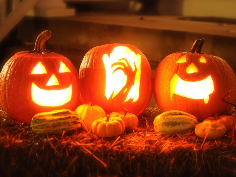 Halloween Tipps für Tierhalter_Kürbisse