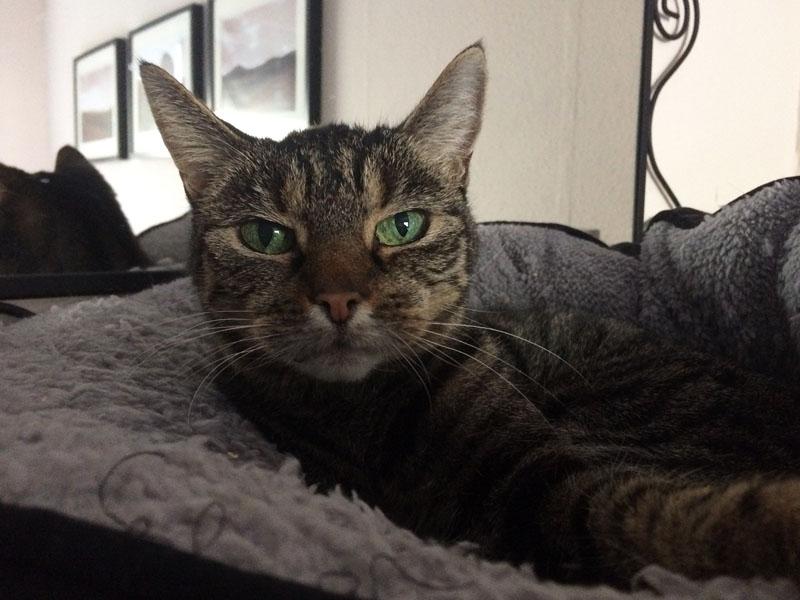 Katze hat Krebs_Lissy © TASSO shelta / Ola M.