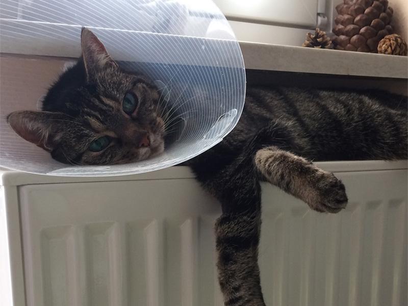 Katze Lissy hat Krebs - TASSO shelta