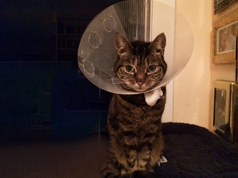 Katze hat Krebs - Lissy