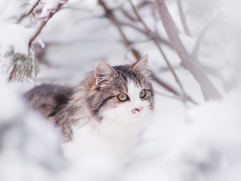 Katze im Winter, Schnee