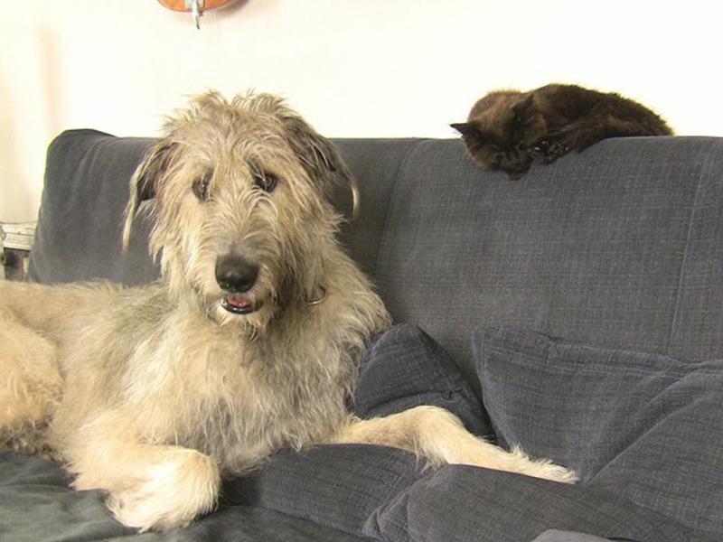 Gründe ein Haustier zu haben_Hund und Katze auf dem Sofa