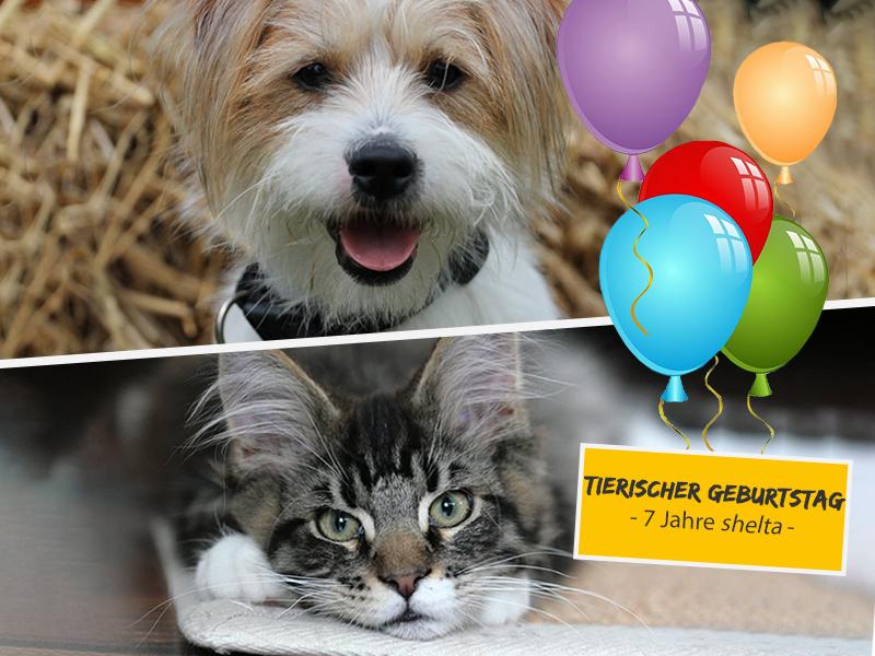 Tierischer Geburtstag - 7 Jahre shelta - Hund und Katze