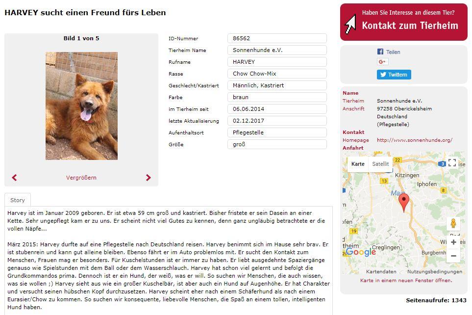 shelta-Tier: Weitere Informationen, Geschichte und Kontaktdaten vom Tierheim.