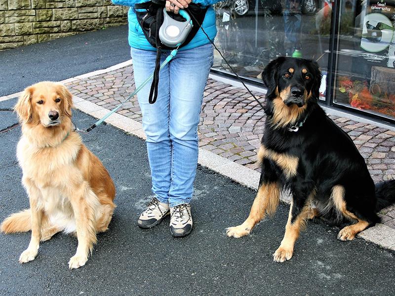 Tierbetreuung - zwei Hunde auf der Straße