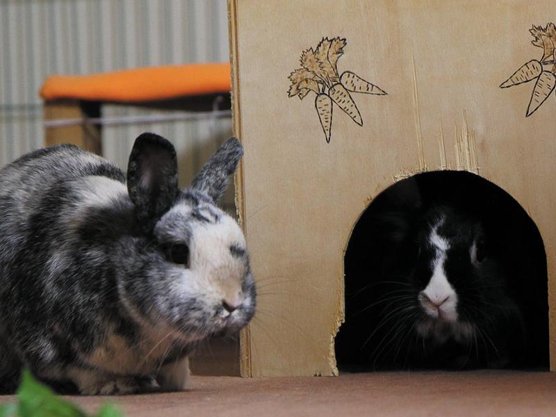 Kaninchen in der Wohnung © Christina Schreier