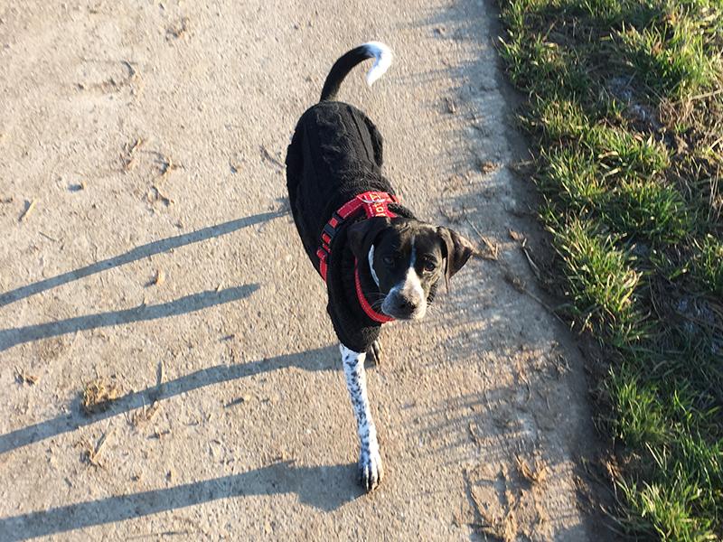 Schnauzensicht - Hund Dotty wartet auf den Frühling