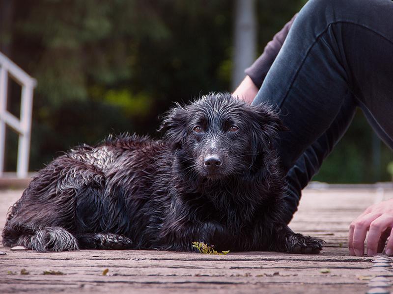Hund und Katze bei Gewitter-nasser Hund