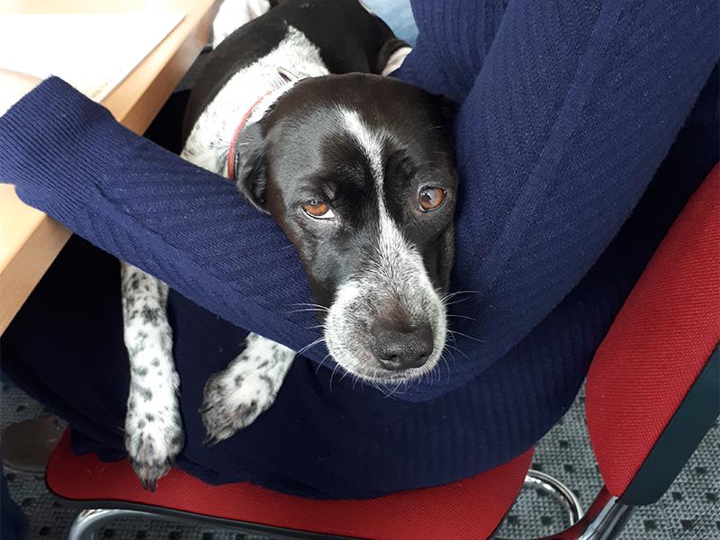 Dotty Lifehacks_Hund auf dem Schoß