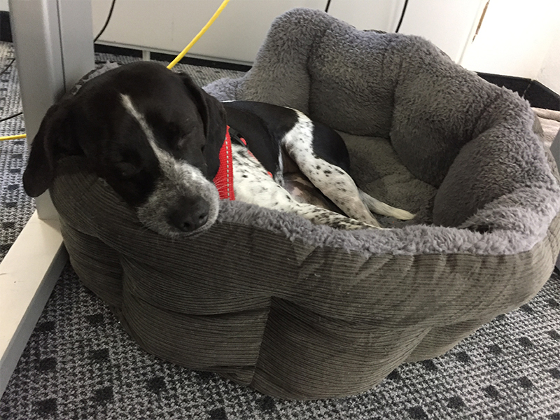 Dotty Lifehacks_Hund schläft im Büro