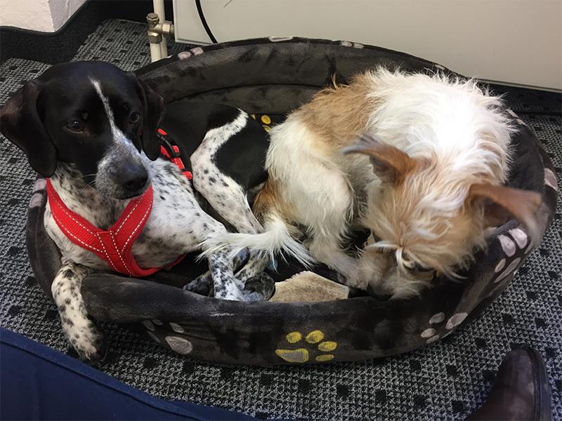 Dotty Lifehacks_Hunde im Körbchen
