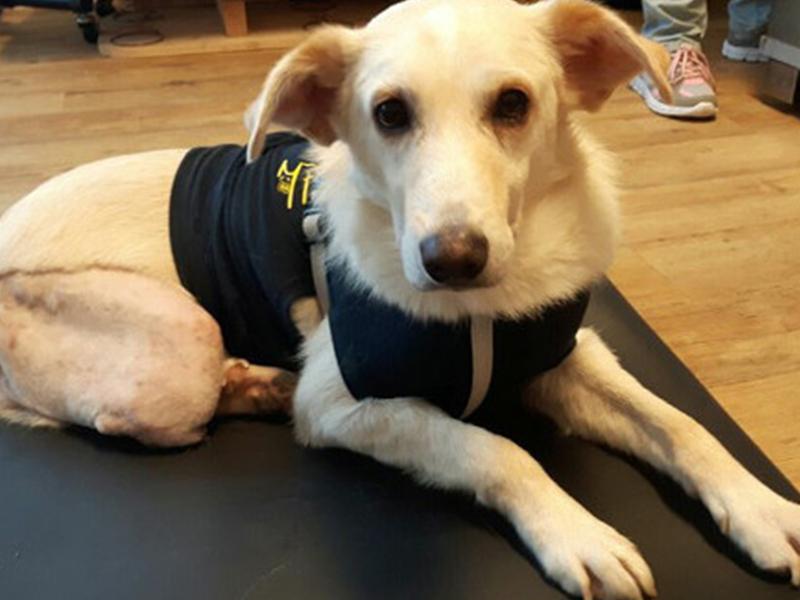 Notfalltier Hund Willi liegt