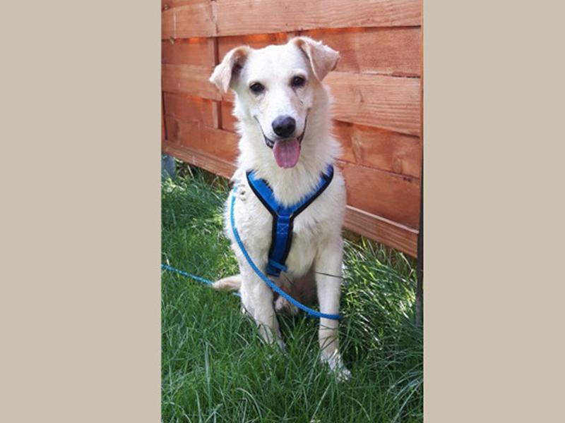 Notfalltier Hund Willi sitzt auf der Wiese