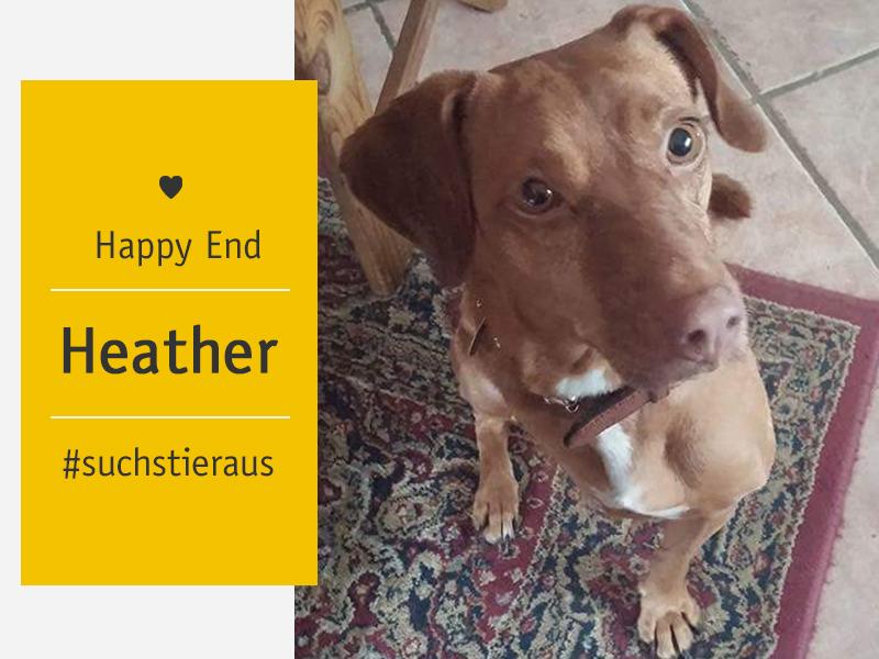 Happy End-Dreibeinige Heather