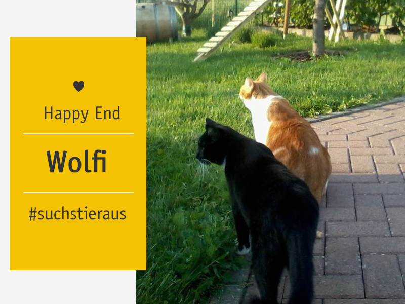 Happy End_ Katzen Charly und shelta-Tier Wolfi