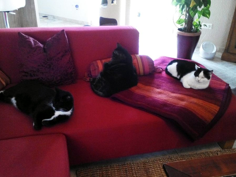 Happy End_Katzen Wolfi, Katty und Ruby (c) Carola T.