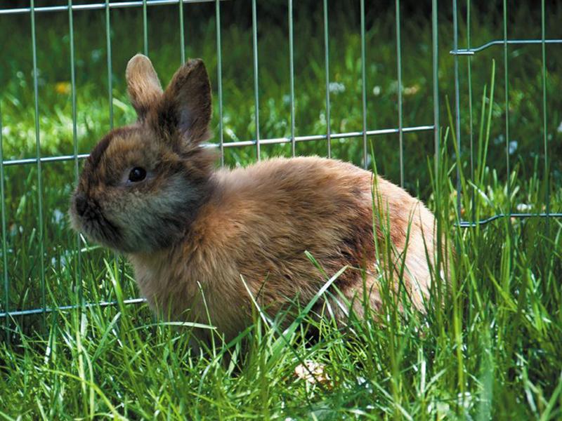 Hitzetipps Kleintiere - Kaninchen auf der Wiese (c) aloa fotos