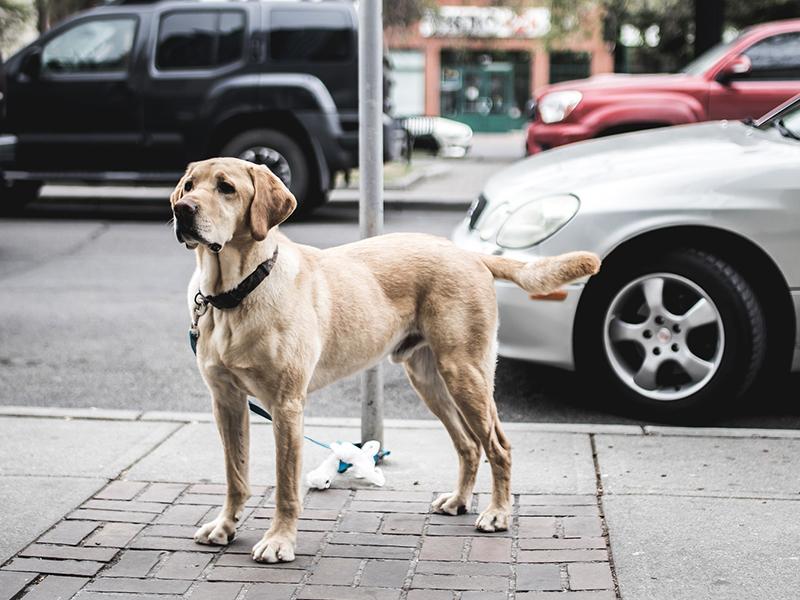 Hund draußen anleinen - Mögliche Gefahren