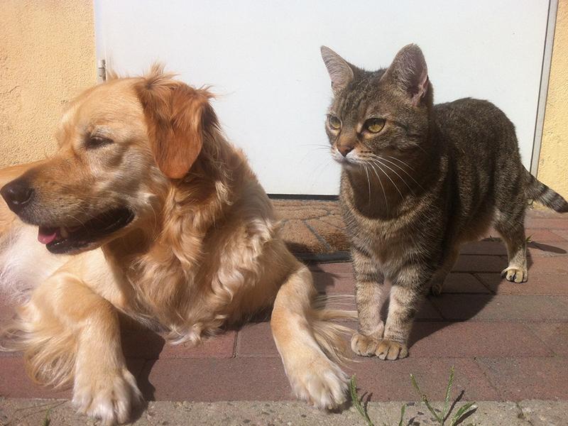Hund und Katze unter einem Dach (c) pixabay.com
