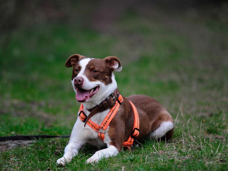 Hund Caruso im Wald
