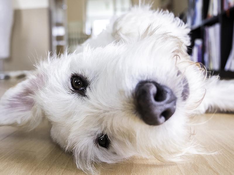 Umzug mit Hund - Vierbeiner liegt auf dem Boden