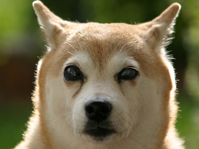Blinder Hund_(c) pixabay.com