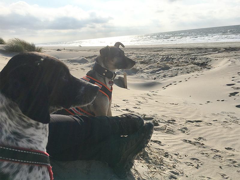 Bucket List Hund - zwei Hunde am Strand