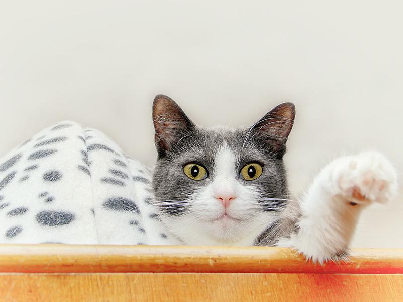 Katze sitzt auf dem Schrank