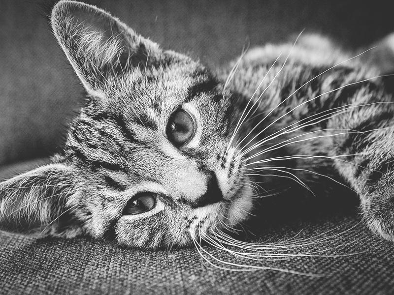 Katze tot. Pfoten hoch (c) pixabay