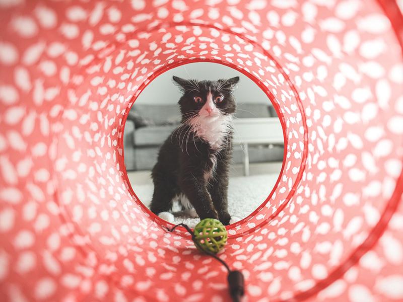 Bucket List mit Katze - Samtpfote spielt (c) pixabay.com
