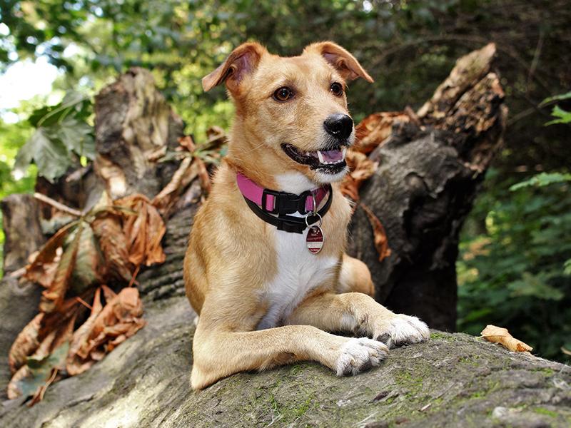 Hund draußen im hebrstlichen Wald_(c) pixabay