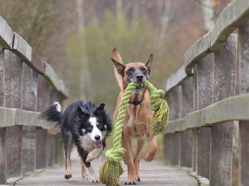 Hunde beschäftigen - aktiv spielen (c) pixabay.com