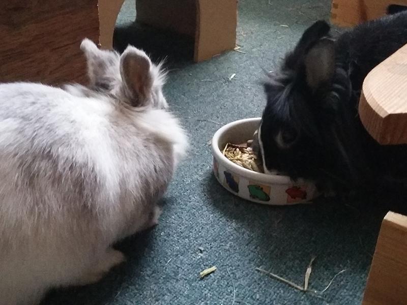 Kaninchen zieht ein - Christinas Kaninchen-WG