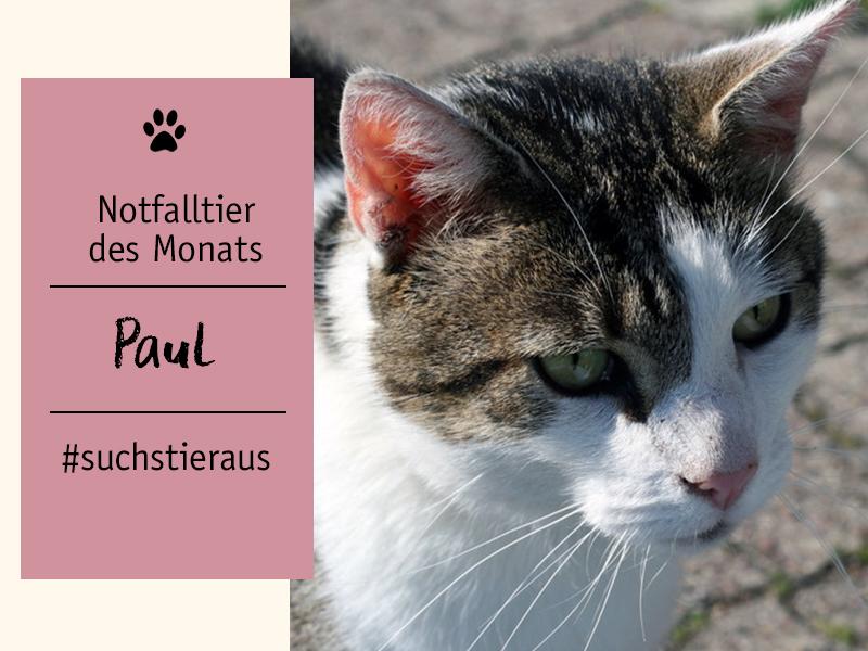shelta Notfalltier Kater Paul - Tierschutztier