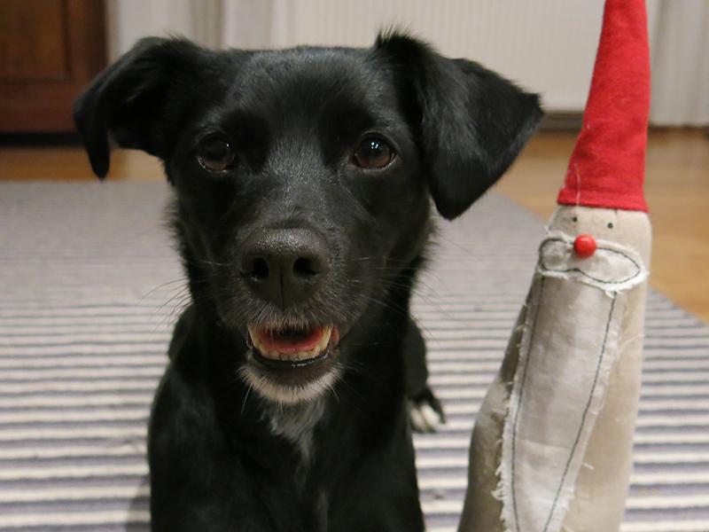Haustier sichere Feiertage - Hund mit Nikolaus