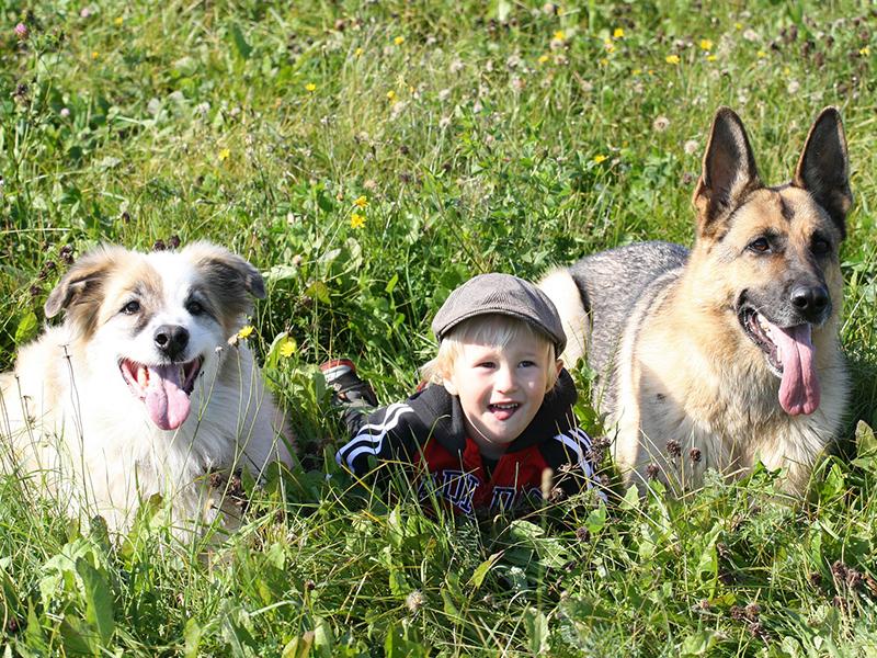 Kinder und Hunde auf der Wiese