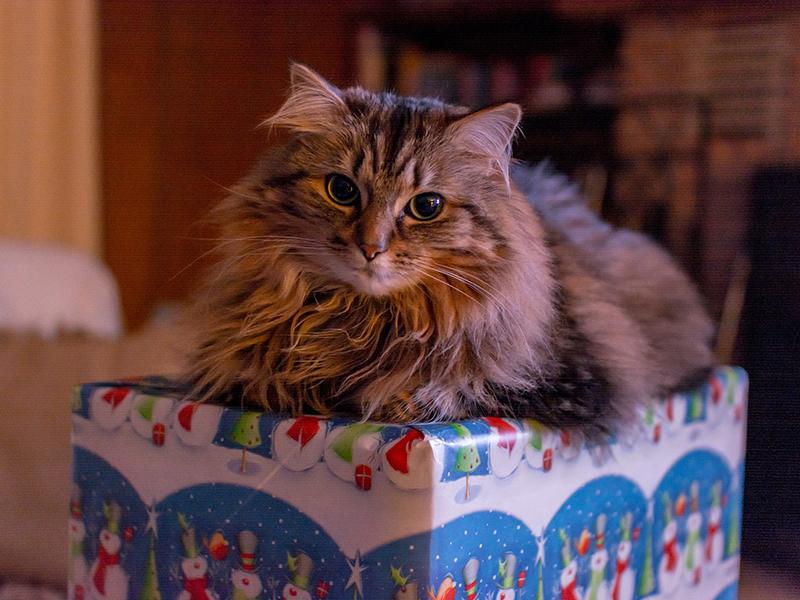 Weihnachtsgeschenke für Haustiere - Katze (c)pixabay