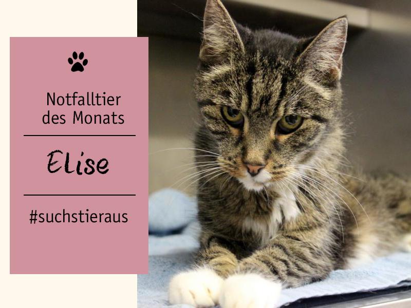 Notfalltier des Monats_Katze Elise_shelta
