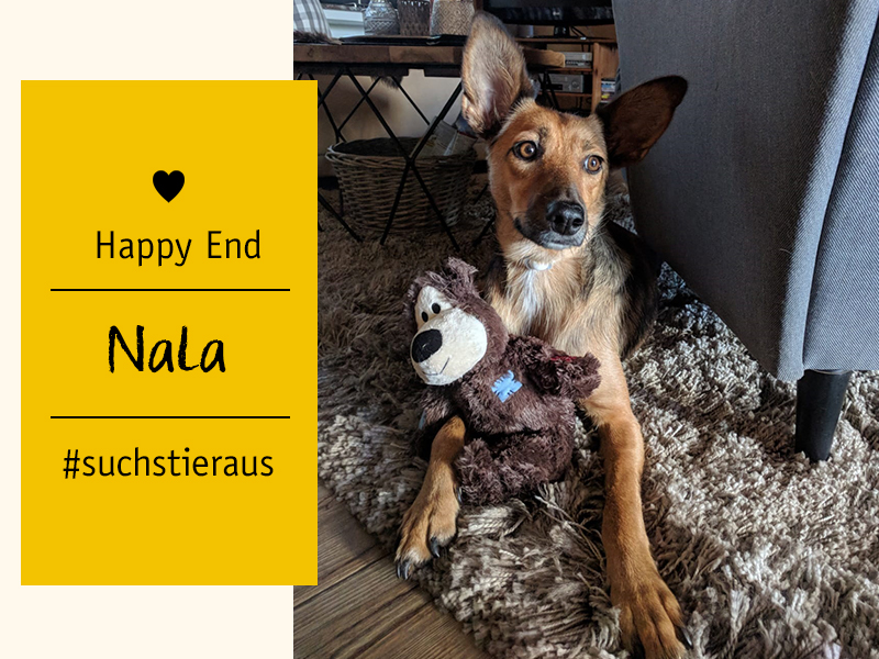shelta Happy End_Hündin Nala