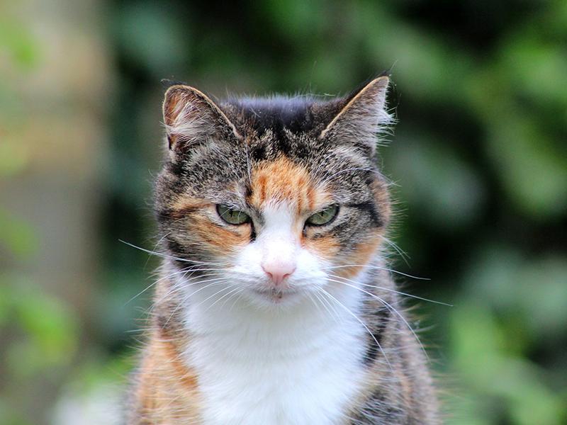 Wie alt werden Haustiere_Senioren Katze